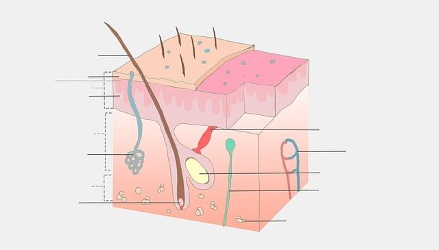 anatomy-439990_640